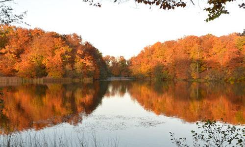 Häckebergasjön i höstskrud